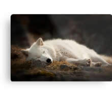 Tranquilty of the Arctic Wolf  Metal Print