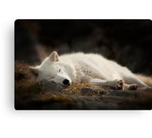 Tranquilty of the Arctic Wolf  Canvas Print