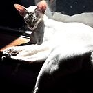 Maya sunbathing by simonescott