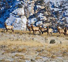 Raghorn's Herd by Kim Barton