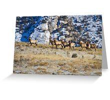 Raghorn's Herd Greeting Card