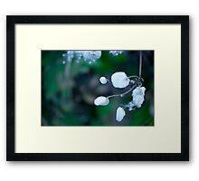 Cotton white flower on green background Framed Print