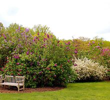 Lovely Seating by Deborah Crew-Johnson