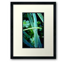 through the clover Framed Print