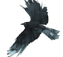 Crow Wings by Cat Graff