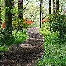 Colorful Walkway by Deborah Crew-Johnson