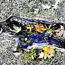 Rooted by Deborah Crew-Johnson