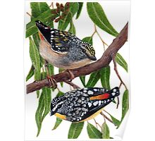 Spotted pardalotes Poster