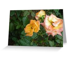 Affection of the roses Greeting Card
