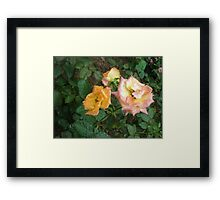 Romance between the roses roses Framed Print