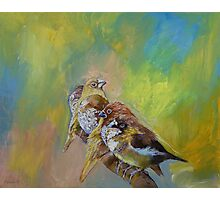 Finches Photographic Print
