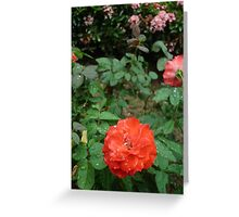 A stunning sparkling red rose Greeting Card