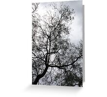 Winter Tree Silhoutte Greeting Card