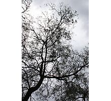Winter Tree Silhoutte Photographic Print