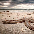 Starfish - Woodman Point, Western Australia by Greg66