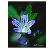 Blue plant Photographic Print