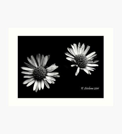 Twin daises in b/w Art Print