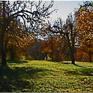 Orchard by Chet  King