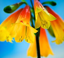 Christmas Bells by Renee Hubbard Fine Art Photography