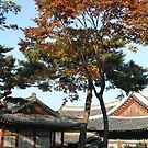 Autumn, Changgyeong Palace, Seoul, Korea by Jane McDougall