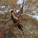 Wedgetailed Eagle by Cheryl Parkes