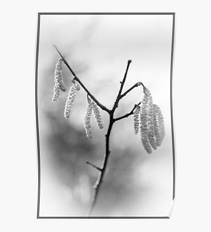 Catkins in Mono Poster