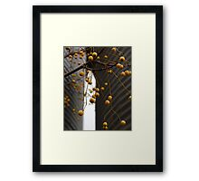 Chinaberry Gray Framed Print
