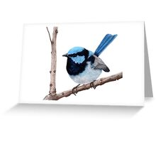 Superb fairy-wren Greeting Card