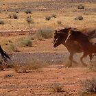 Brumby Rush by MiksPics