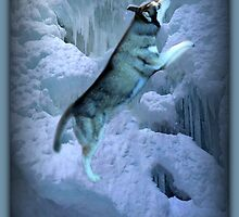 A SHIMMER OF LIGHT AS I STAND ALONE IN LEAPS AND BOUNDS-HUSKEY CANINE PICTURE AND OR PRINTS ECT. by ✿✿ Bonita ✿✿ ђєℓℓσ