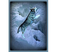 A SHIMMER OF LIGHT AS I STAND ALONE IN LEAPS AND BOUNDS-HUSKEY CANINE PICTURE AND OR PRINTS ECT. Photographic Print