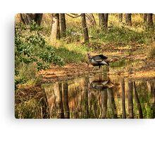 Wild Turkey Reflection  Canvas Print