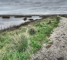 Trail Into The Wetlands - Bayou Vista, Texas by tiptoncreative