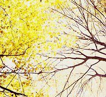 Canopy by DBGuinn