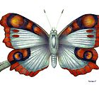 Butterfly by Indigo46