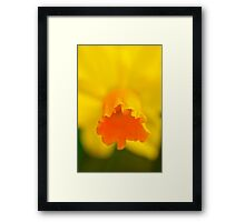 Yellow Spring Narcissus Daffodil Flower Close-up Framed Print