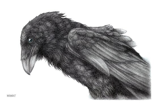 King crow by Indigo46