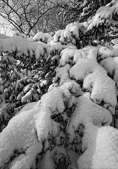 Branches and Snow 1 by Robert Ullmann