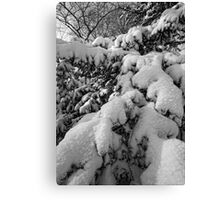 Branches and Snow 1 Canvas Print