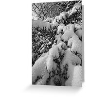 Branches and Snow 1 Greeting Card