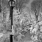 Lamp Post and Snow by Robert Ullmann