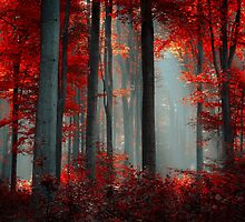 Autumn Rays by Ildiko Neer