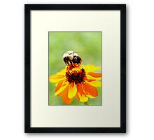 Bee on a Flower Framed Print