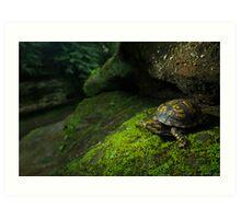 Box Turtle at Old Man's Cave Art Print