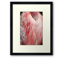 Sleeping Greater Flamingo Coral Pink Wing Feathers Texture Framed Print