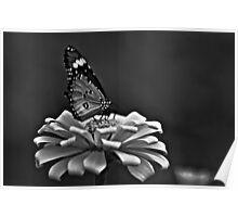 Madam Butterfly...Got Featured Work Poster