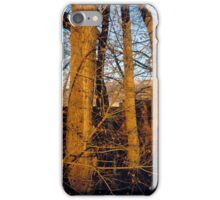 New Mexican Winter iPhone Case/Skin