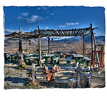 Vineyard picnic area Photographic Print