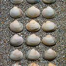Heart Shells On Shell Sands - Art Work by RainbowArt