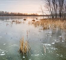 Beaver Place by Jola Martysz